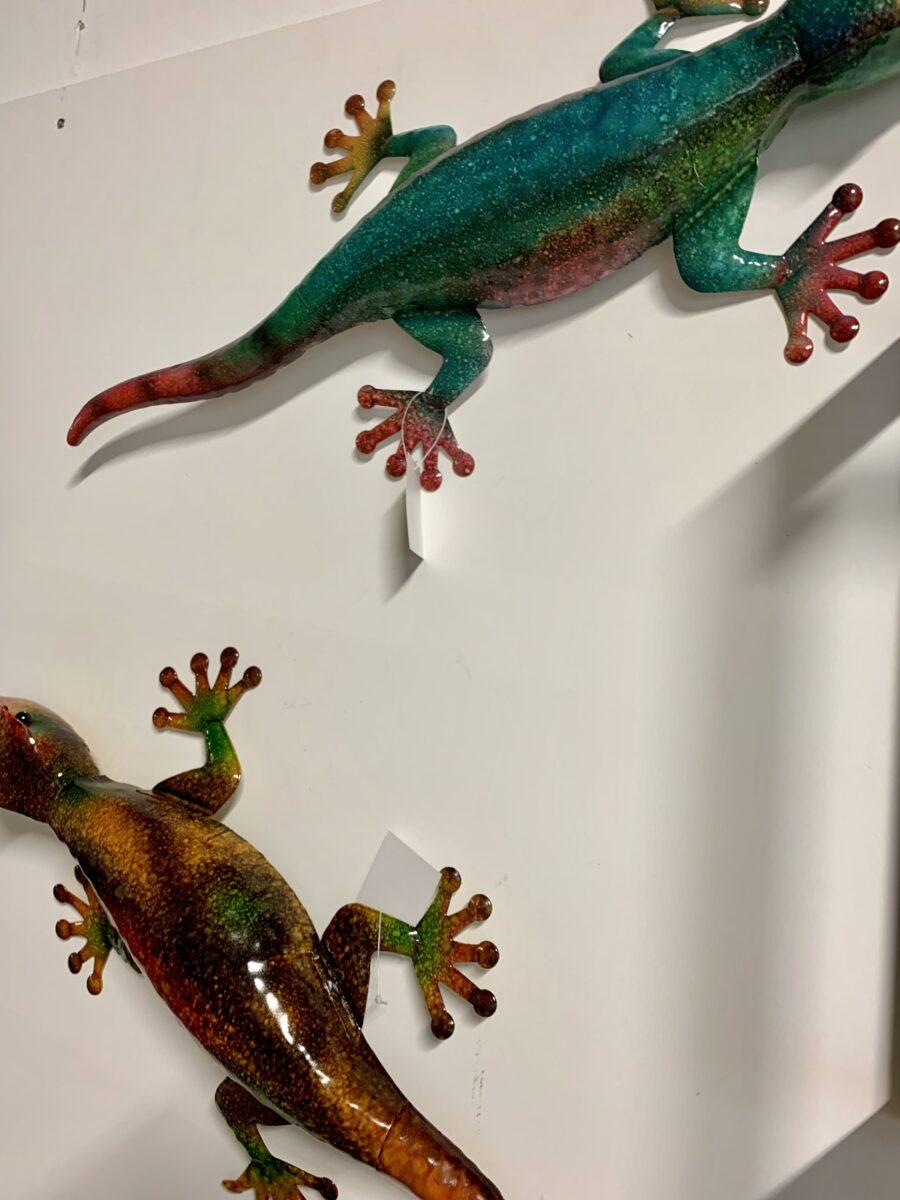 Hagedis multicolor